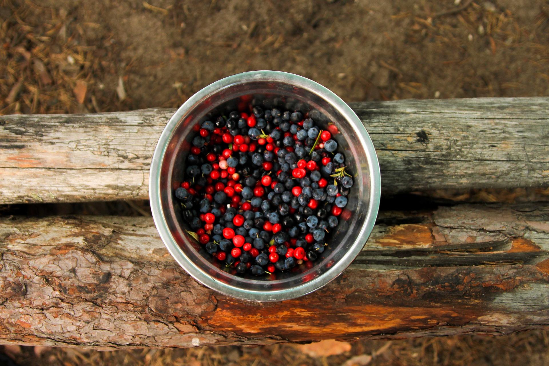 berry-2144195_1920