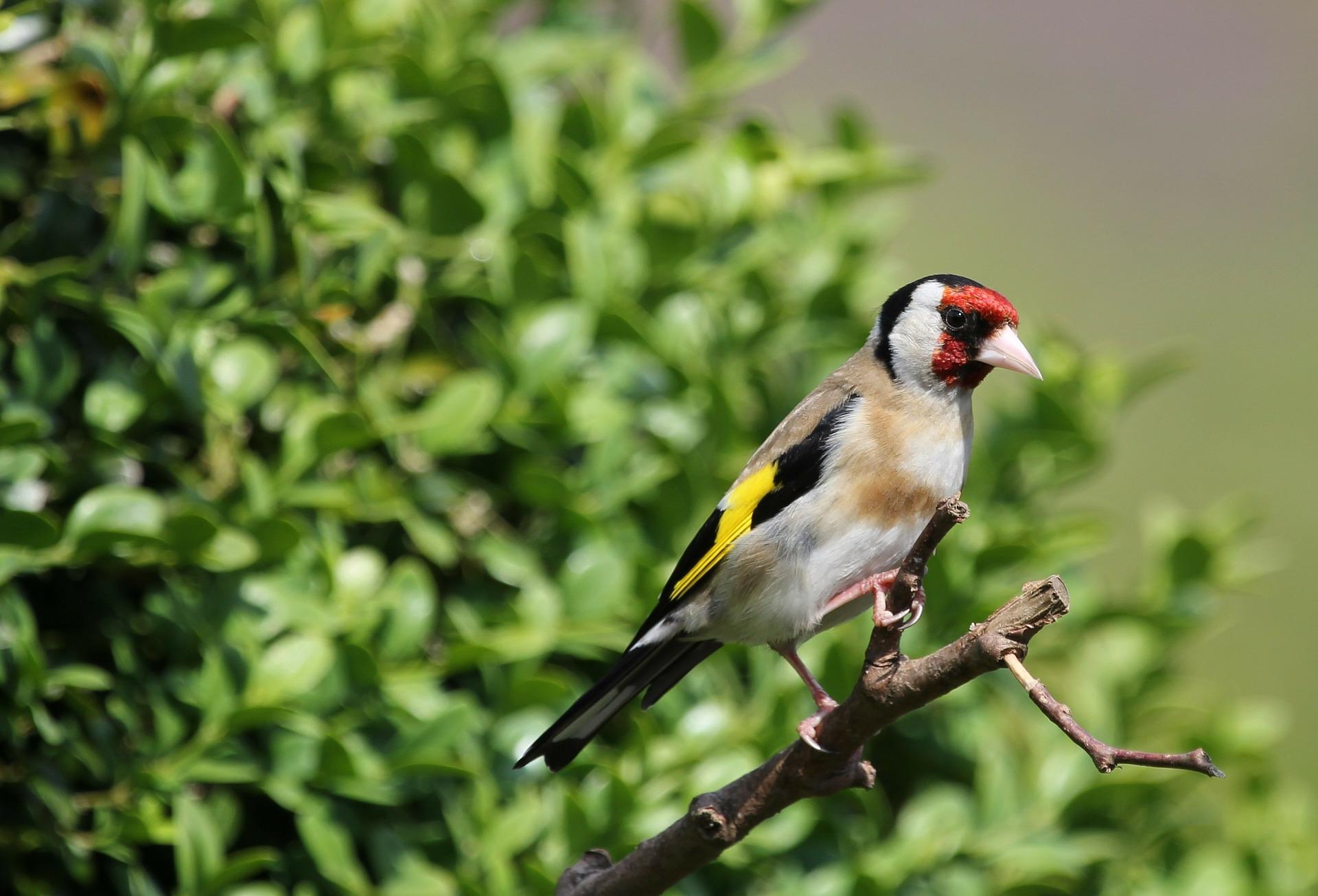 bird-162843_1920