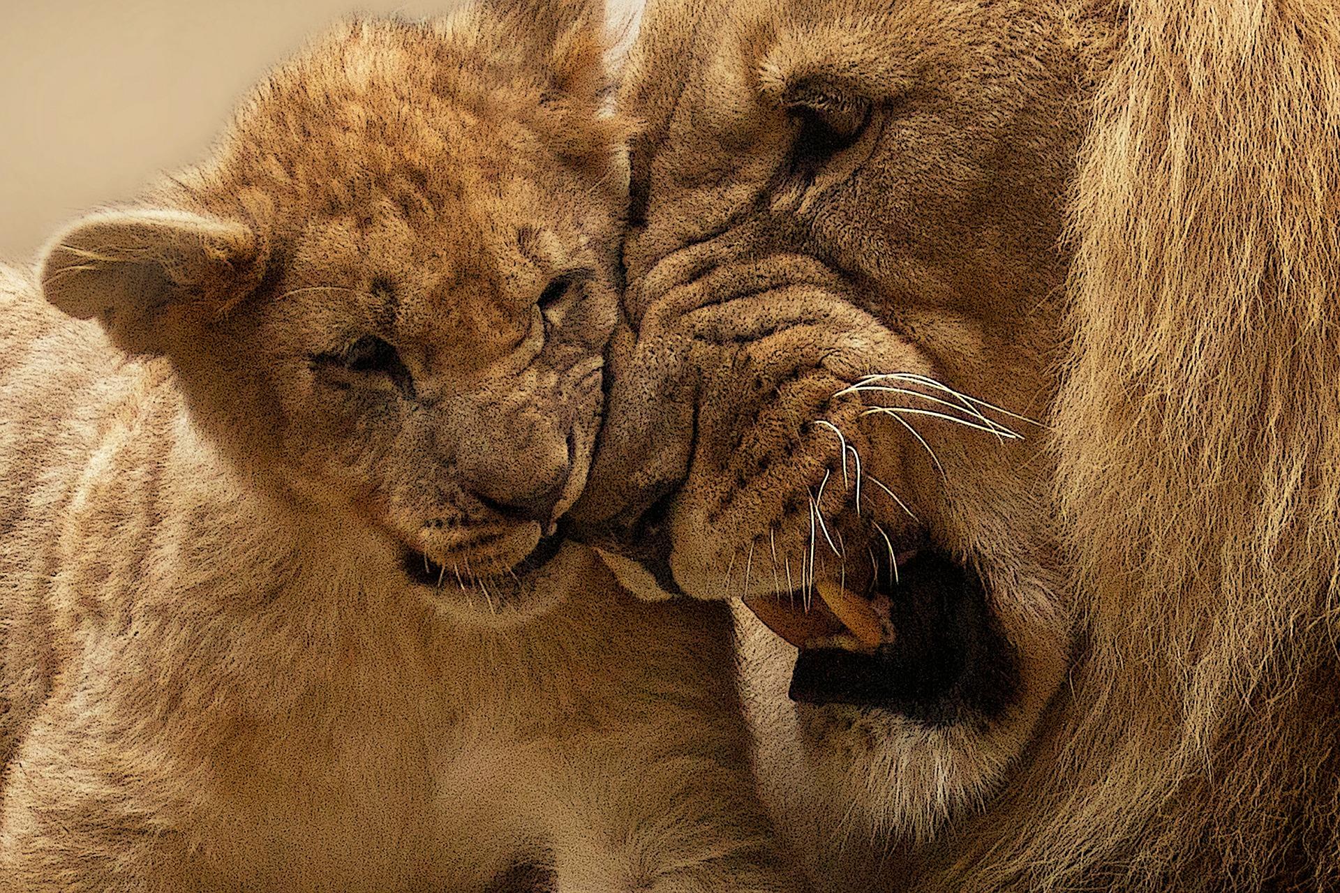 lion-565818_1920