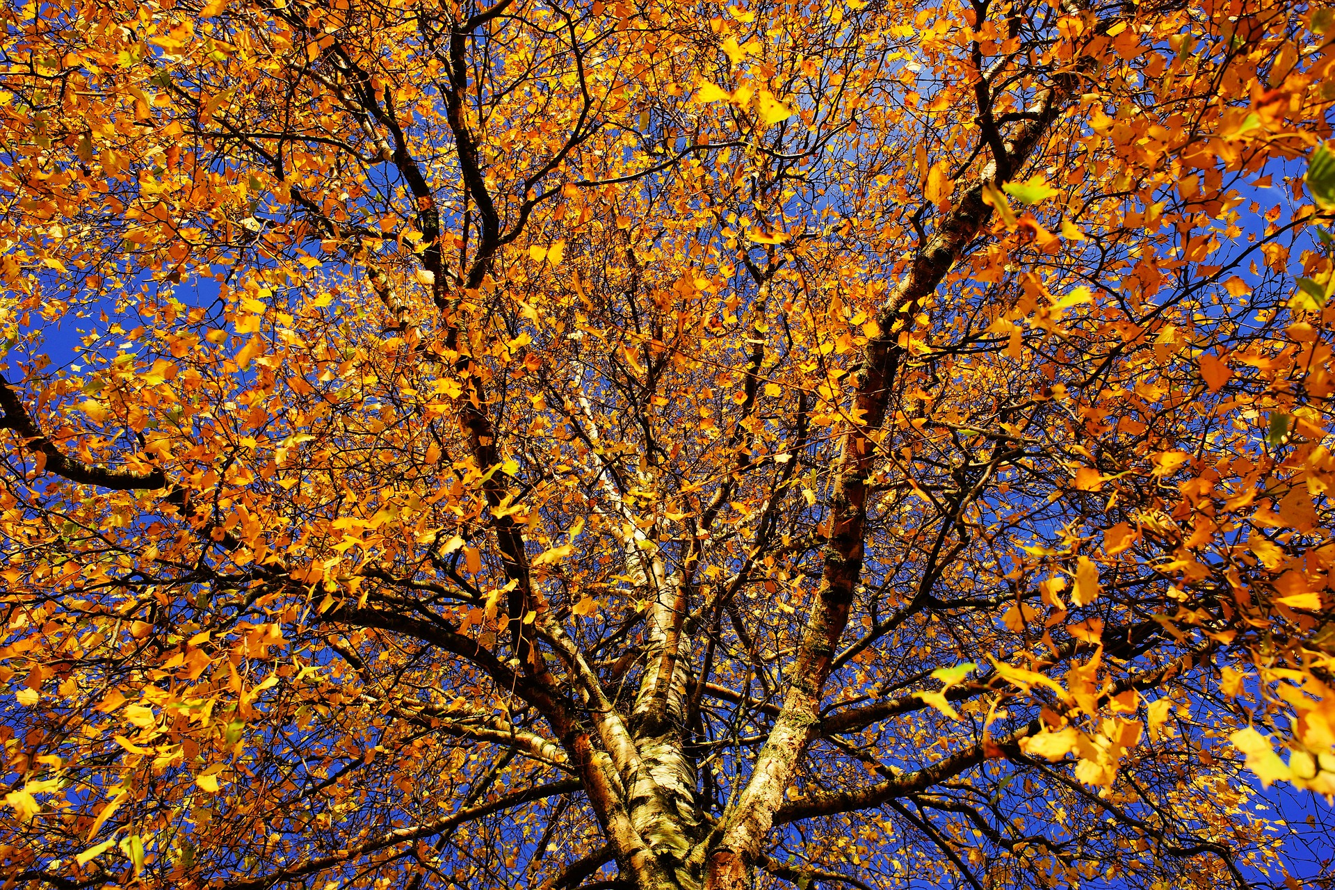 tree-1862633_1920