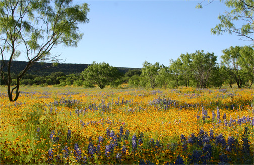 Texas Wildflowers: The Willow City Loop