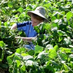"My son, when he was young, doing his ""work"" in the garden (literally, gleaning beans from a field)."