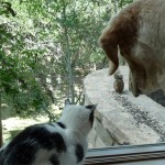 My cat, Lily, and dog, Sanday, are fascinated by the squirrel that comes to eat just outside their window.