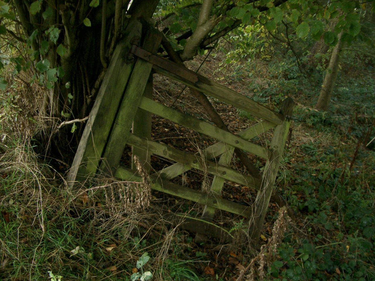 Which narrow gate is the narrow gate Jesus wants us to walk through?