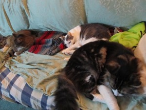 Three beloved cats, now dead.