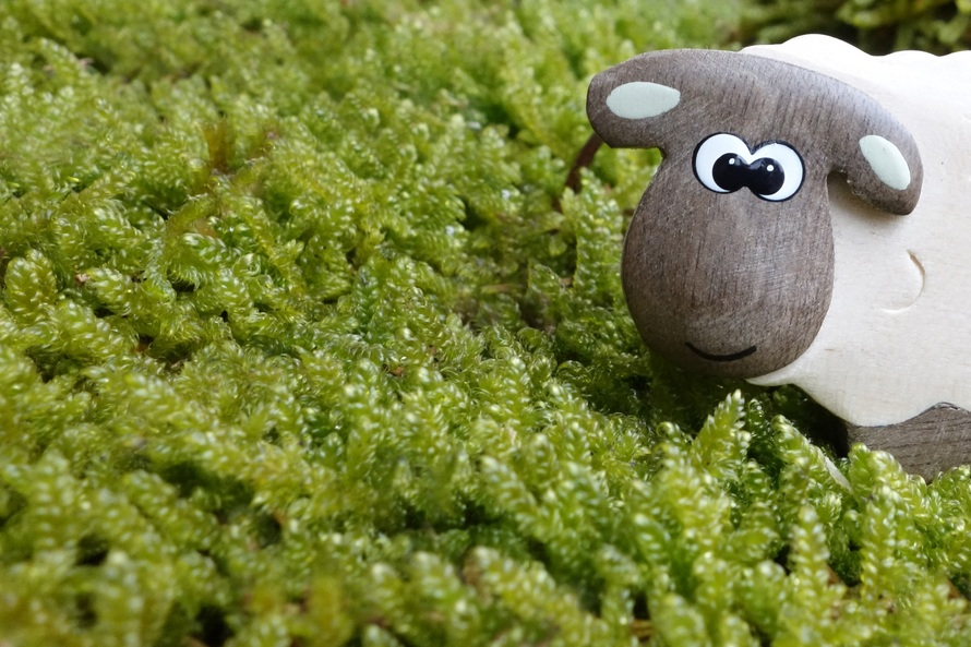 sheep-moss-meadow-eyes-50698-large