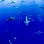 When Shark Tank Met the Church: An Update on Innové