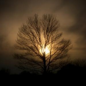 tree_soul_by_sixwings