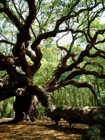 """Meditation under the Angel Oak"" © Alison Leigh Lilly"
