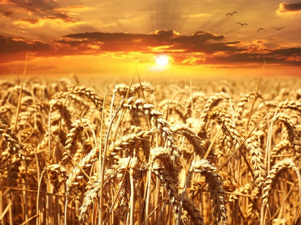 What Lammas Is and Is Not