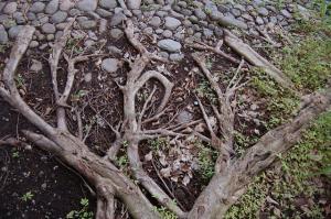 Gaia. Photo by Presagio (cc) 2007.