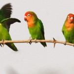 Cannot stomach the photos of abusers and their abused so here's a pretty picture of sun conure parrots instead