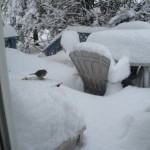 Too much snow!