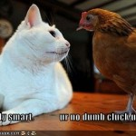 It's demeaning to call another person a 'dumb cluck' and not sure it's ever appropriate to call an animal that either! Debi Pearl sometimes uses put downs no one should use in polite society