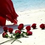 rosesinsand