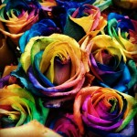 When you force dye roses to make them certain colors it shortens the life span of the rose considerably. I would think doing the same with humans might have the same effect, or at the very least lead to a life filled with frustration.