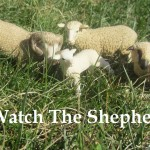 Watchtheshepherd