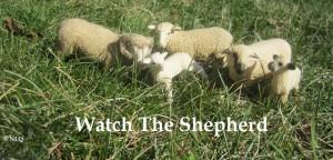 Watchtheshepherd
