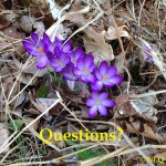 NLQ Question of the Week: Why Ask God Only For Little Things?