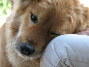 What dogs teach us about God – Part 4 (and final)