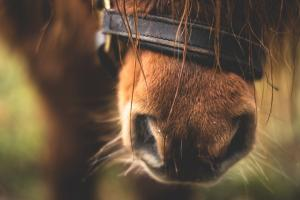 Horse from Pexels