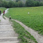 Apprentices allow dogs to pass rather easily.