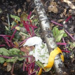 Enchanted Composting