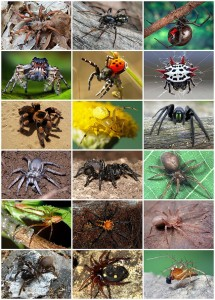 A diversity spiders.