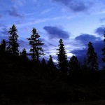 800px-Night_trees_forest