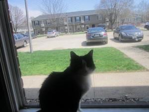 Connie's Cat