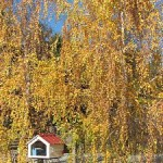 jscl_fall_trees_mailbox_at_school_v_brightened