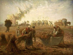 Buckwheat_Harvest_Summer