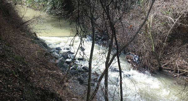 It's actually a creek!  I can't believe it!