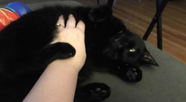 Rub My Belly Human!