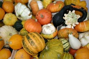 800px--_Pumpkins_-