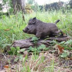 wild_boar_by_woodcarve-d7yr8gb