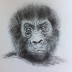young_gorilla_by_steph_od-d7xwtq4