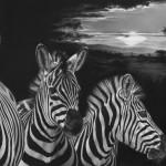 black_stripes___zebra_drawing_by_mkliemand-d8e8fvp