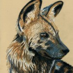 african_wild_dog_by_lonely_wolf_22-d83dx8o