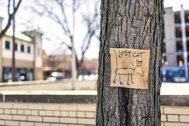 lost-cat
