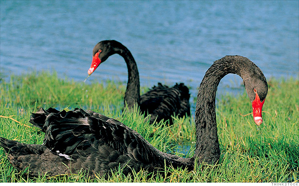black-swan-ju-blog