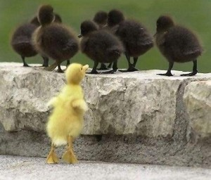 One duckling is not like the others.