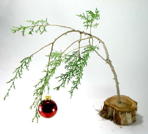 Put up your tree and look to the future
