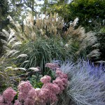 Ornamental Grasses, How to Prune: Practical Gardening Series