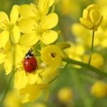 Ladybug Blunder