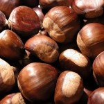 Chestnuts at Christmas, A Garden Catechism