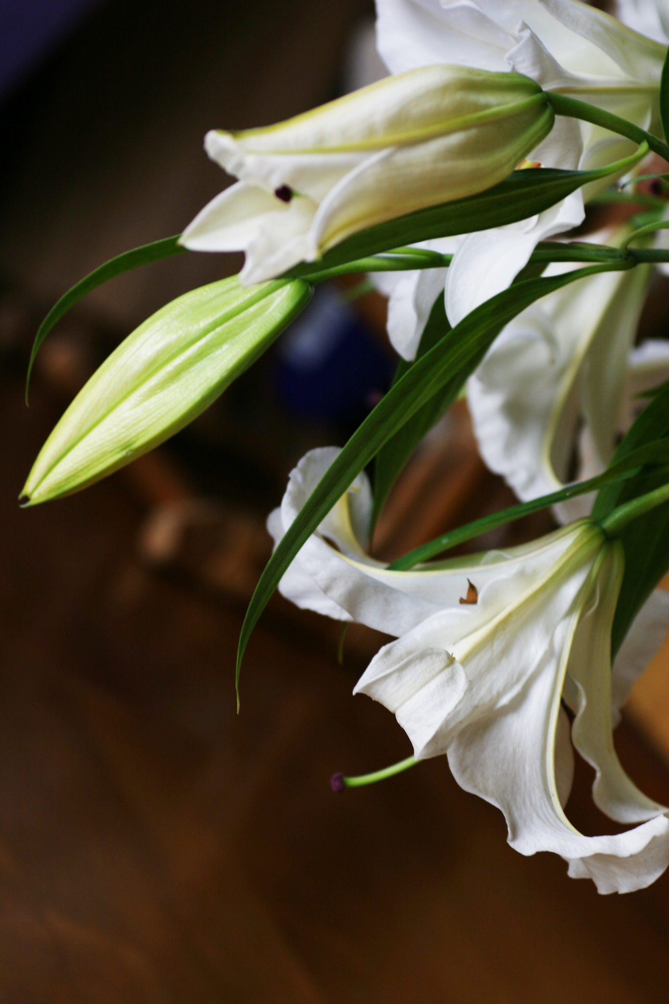 Top 5 flowers of the annunciation margaret rose realy obl osb file0001616564937 madonna lily izmirmasajfo