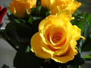 Image by vdaiga, morguefile.com.