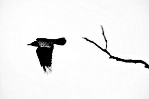 crow file000348520161