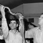 Snake handling at Pentecostal Church (Image via Wikimedia)